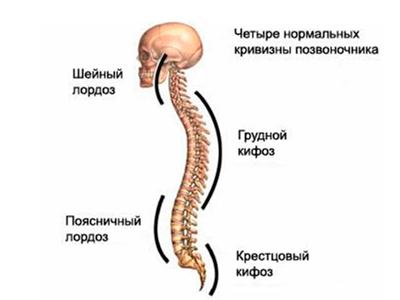 Физиологический лордоз