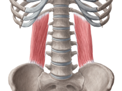 Квадратная мышца поясницы