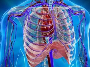 Заболевания и патологии средостения, которые можно определить при помощи УЗИ